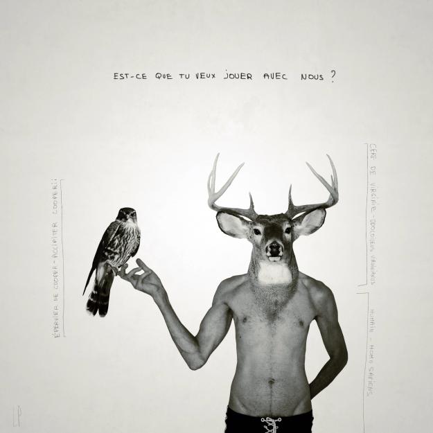 Le cerf et l'épervier de Cooper #3 / Luc Pallegoix, 2013. Encre pigmentaire sur papier Moab blanc 300 gr. Disponible en grand format | 50 x 50 cm 5 ex.| ou moyen format | 23 x 23 cm 10 ex. |