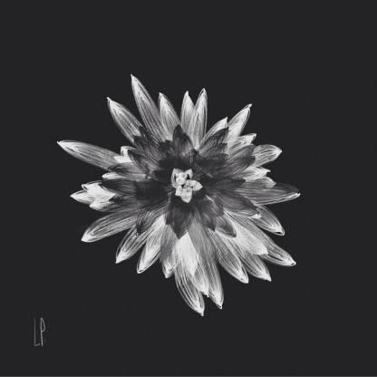 Fleur d'effroi / Luc Pallegoix, 2014. Encre numérique puis pigmentaire sur papier Moab blanc 300 gr. Disponible en grand format [50 x 50 cm] ou moyen format [23 x 23]